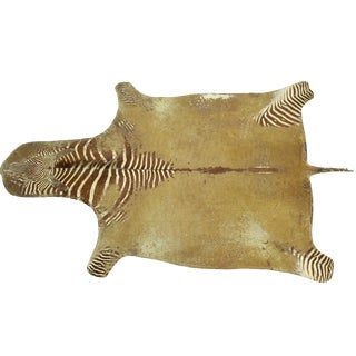 Large Heavily Distressed Antique Burchell Zebra Hide Rug