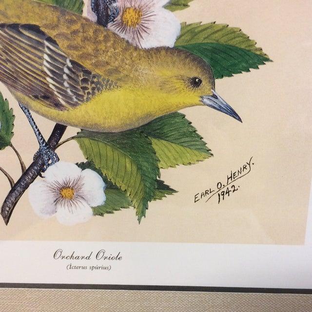 Vintage Earl O Henry Bird Prints - 4 Framed Prints For Sale - Image 12 of 13