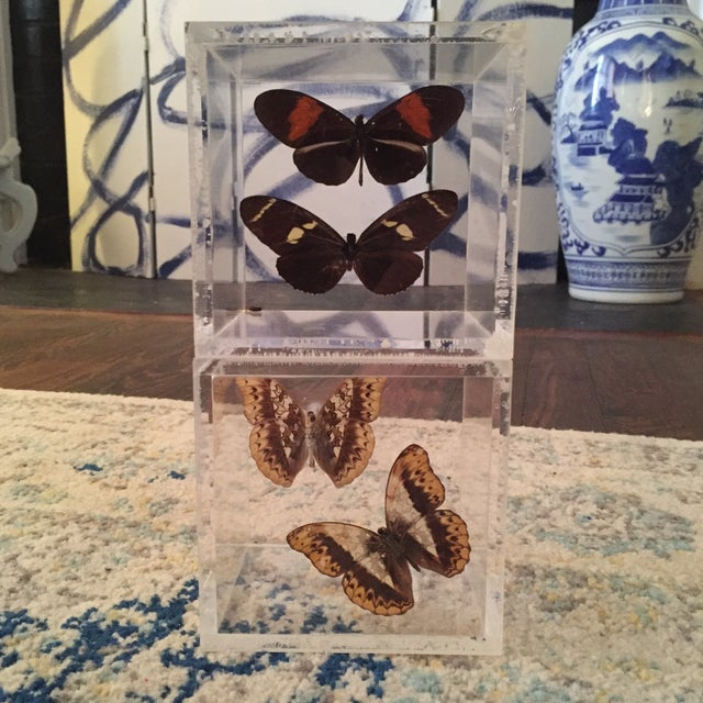 Lucite Cube Box Encased Butterfly Specimens Oddities Curiousities- a Pair - Image 11 of 11