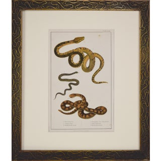 "19th Century Antique ""Boa Constrictor, Viper, Rattlesnake"" Snake Print, 1851 For Sale"