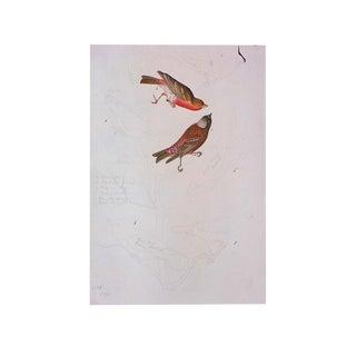 Birds of America Print by John James Audubon, 1966 For Sale
