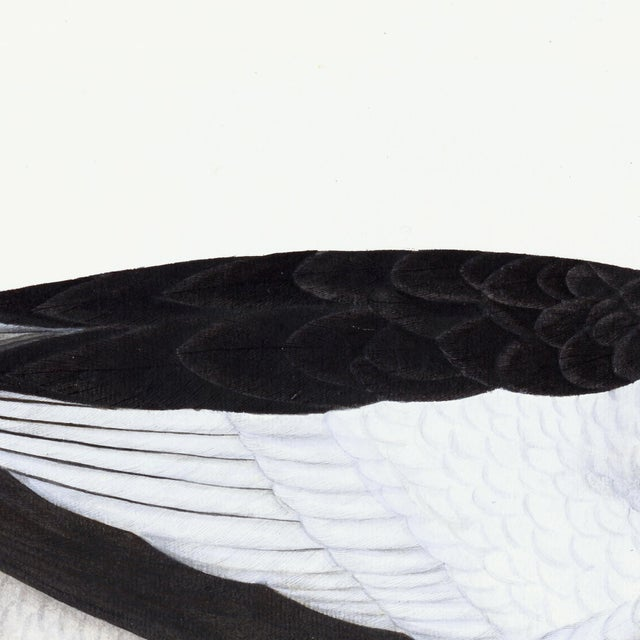 Male Goosander Plate 22 by Olof Rudbeck (Cfa-Wd) For Sale - Image 4 of 6