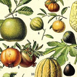 Antique 'Fruit' Wall Hanging Preview