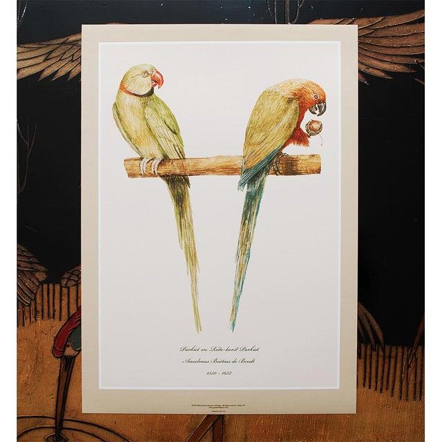 Contemporary XL 1590s Contemporary Prints of Anselmus Boëtius De Boodt Parrots - Set of 6 For Sale - Image 3 of 9
