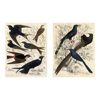 Gallivani Birds, Set Of 2, Unframed Artwork For Sale