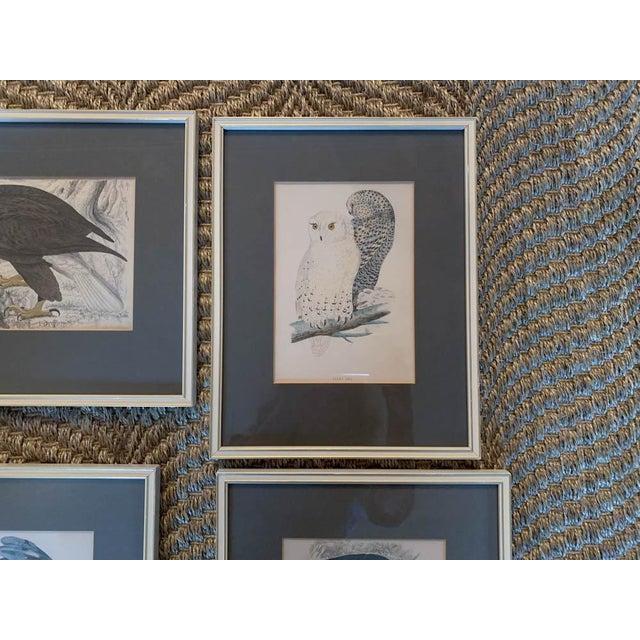 Glass Set of 6 1840's Bird Engravings - Framed For Sale - Image 7 of 11