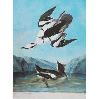 1960s Cottage Lithograph of Smew by John James Audubon For Sale