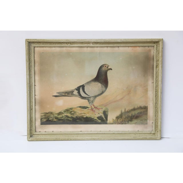 Wood Belgian Colored Framed Pigeon Engraving For Sale - Image 7 of 7