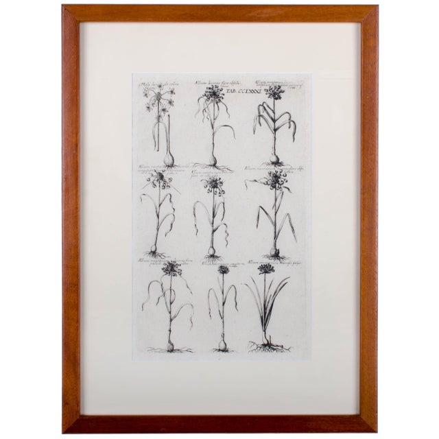 Offered is a pair of 18th century botanical engravings handsomely framed in hand crafted mahogany frames made here in our...