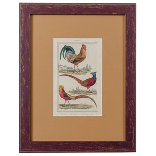 1830s Traditional Rooster and Pheasants Engraving, Vauthier For Sale