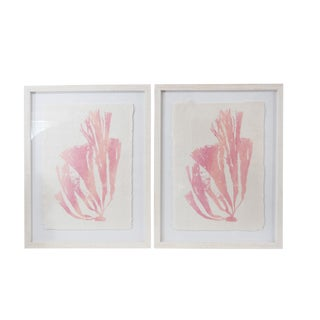 Shabby Chic Sea Weed Prints - a Pair For Sale