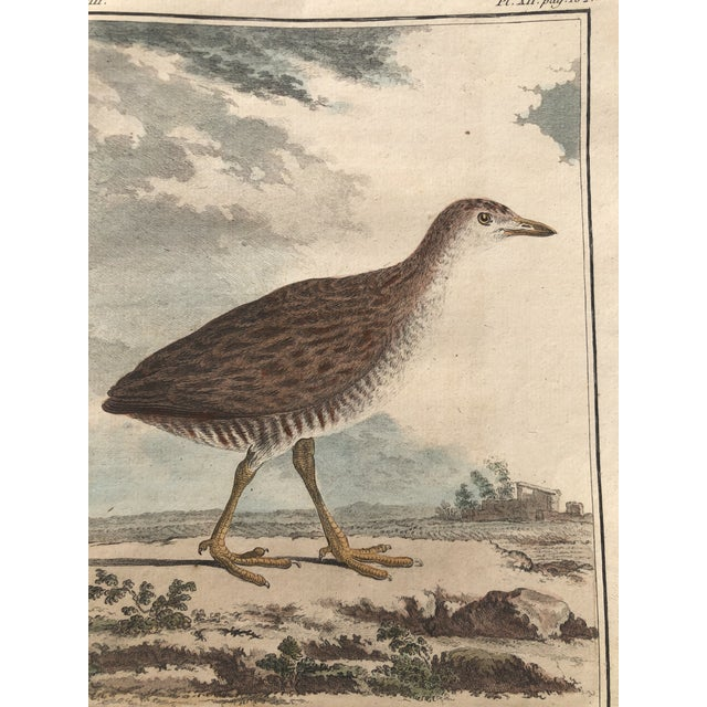 Paper 18th Century French Bird Engraving Signed by Jacques De Sève Featuring a Rale De Terre For Sale - Image 7 of 13