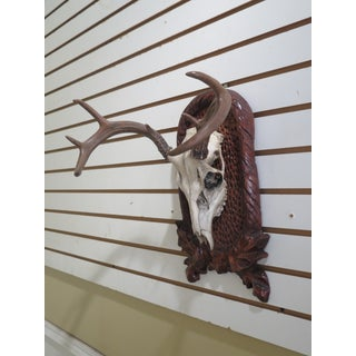 Decorative Mounted Deer Skull Preview