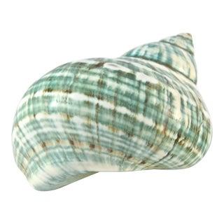 Aqua Green/Blue Turbo Shell For Sale
