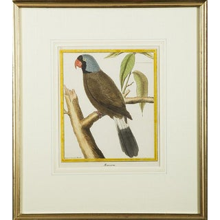 """18th Century Antique Martinet """"Mascarin"""" Parrot Copper Plate Engraving Print For Sale"""