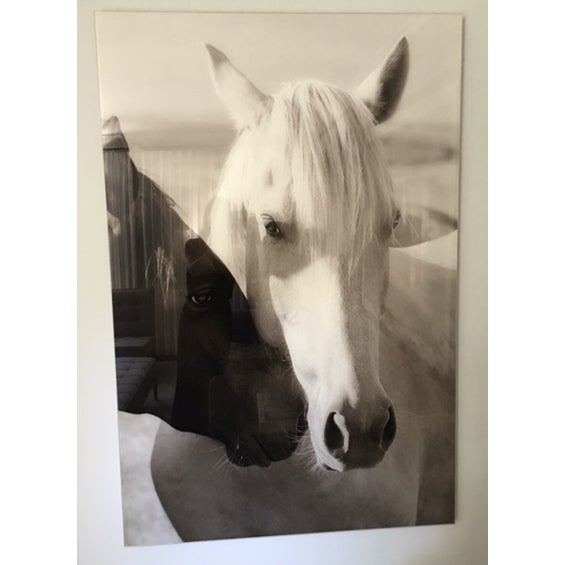 Edelman Sermo Per Equus Lindisimo Photograph - Image 2 of 4