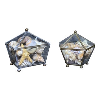 Early 20th Century Grand Tour Style Glass Boxes With Shells - a Pair For Sale