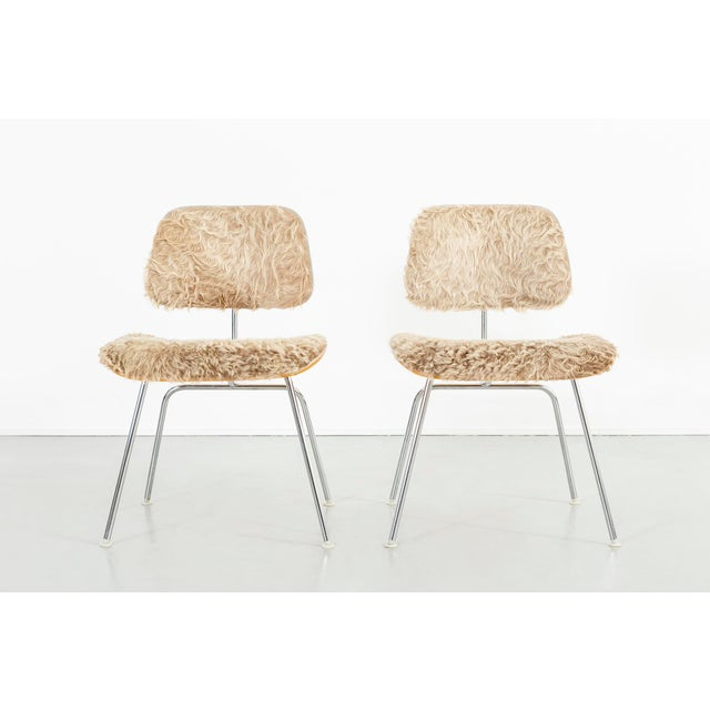 set of two DCM chairs designed by Charles + Ray Eames for Herman Miller USA, d 1946 / c 1970s wood, metal + longhair...