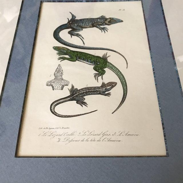 Custom Framed 1832 French Lizard Print - Image 6 of 8