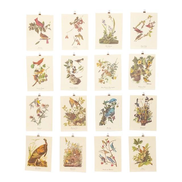 1960s Audubon Bird Prints | 17 Pc Gallery Collection For Sale