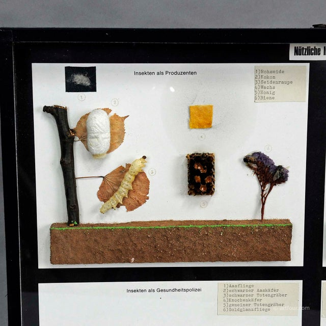 a classical vintage school teaching showcase with specimen illustrating usefull insects (insects as producers, insects...