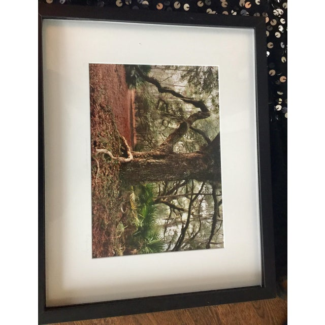 Cumberland Island Photograph by Laurie Coppedge For Sale - Image 4 of 5