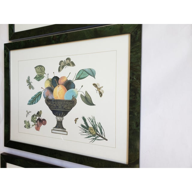 Decorative Butterfly Botanical Framed Prints-Set of 3 For Sale - Image 4 of 12