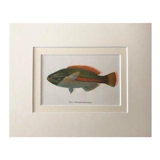 Vintage Hawaiian Fish Lithograph Preview