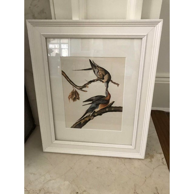 Framed Vintage Bird Prints - Set of 8 - Image 9 of 11