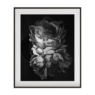 "Original Signed and Numbered ""Coral Charm Peonies IIII"" Framed Photograph by Jean Karotkin For Sale"