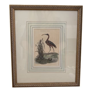 Framed Antique English Bird Print For Sale