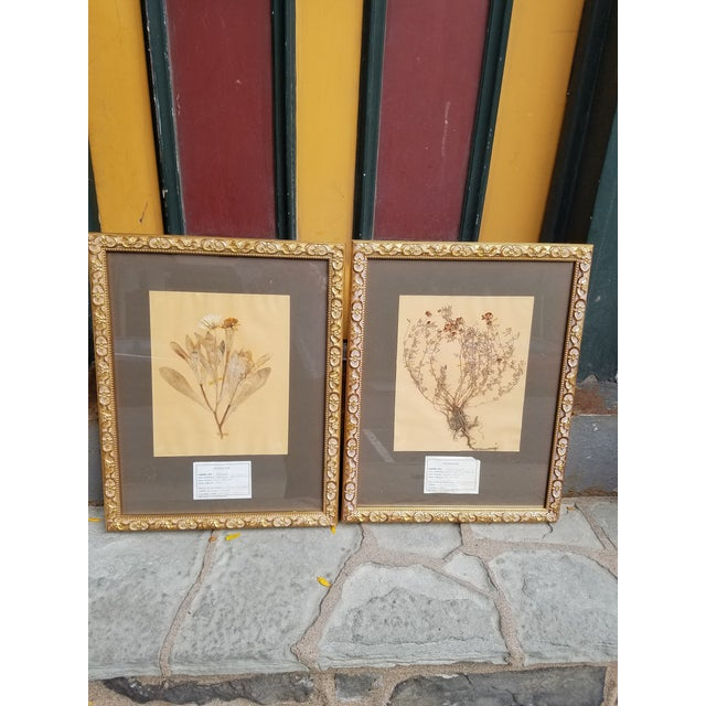 Vintage French Decorative Framed Paris Botanical Herbier Specimens - a Pair For Sale In Philadelphia - Image 6 of 6