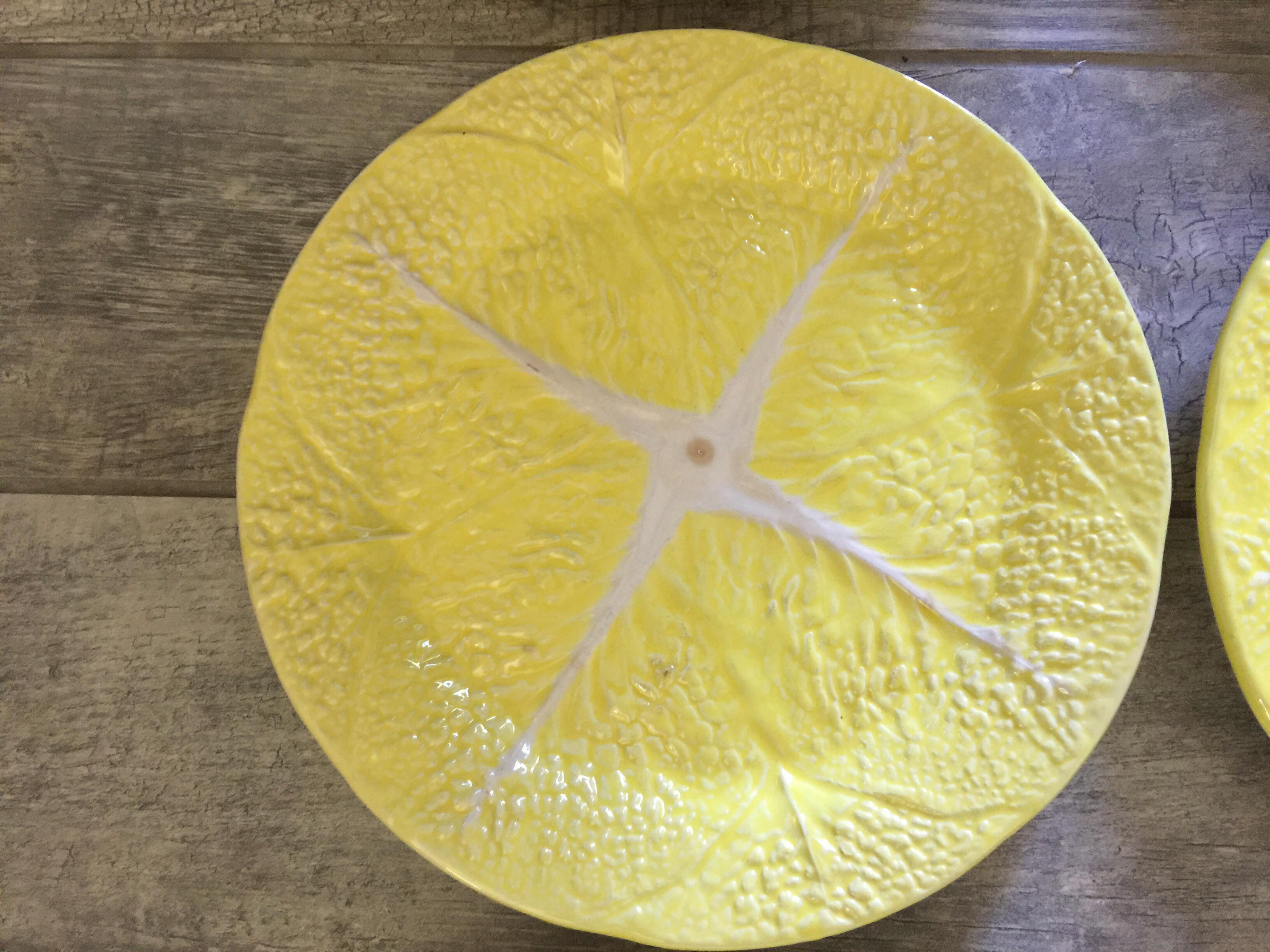Secla Yellow Cabbage Large Dinner Plates - Set of 9 - Image 6 of 12  sc 1 st  Chairish & Secla Yellow Cabbage Large Dinner Plates - Set of 9 | Chairish