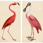 Pink Bird Prints, Unframed - a Pair