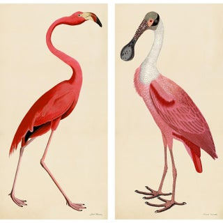 Pink Bird Prints, Unframed - a Pair For Sale