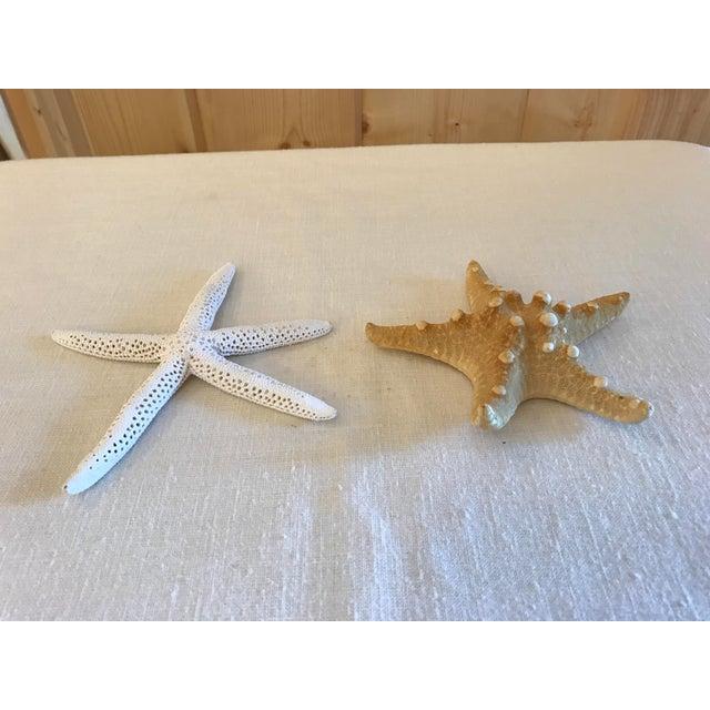 Natural Starfish - a Pair - Image 8 of 9