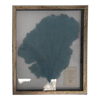 Blue Haze Sea Fan in Antiqued Silver Frame For Sale