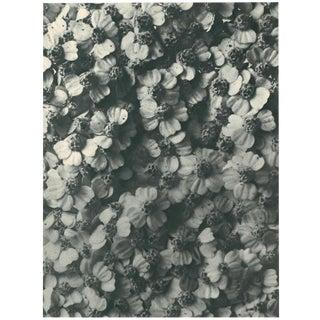 1928 Original N114 Achillea Millefolium Photogravure by Karl Blossfeldt For Sale