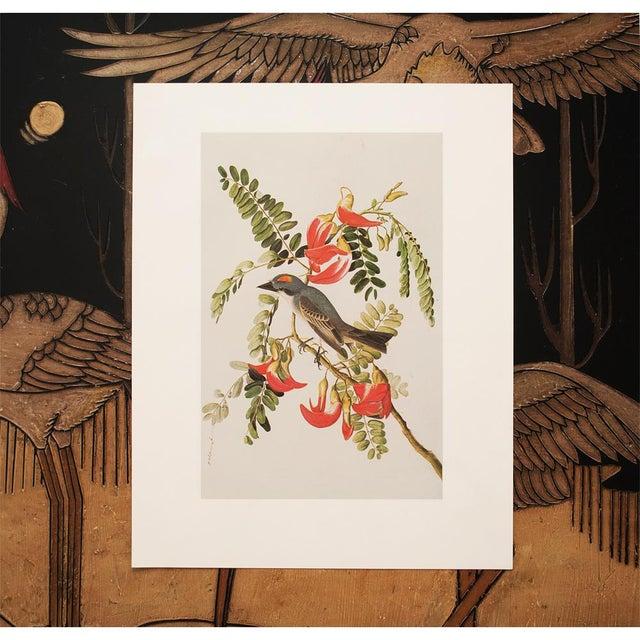 Printmaking Materials 1966 Gray Kingbird by John James Audubon For Sale - Image 7 of 10