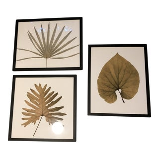Framed Pressed Botanicals - Set of 3 For Sale