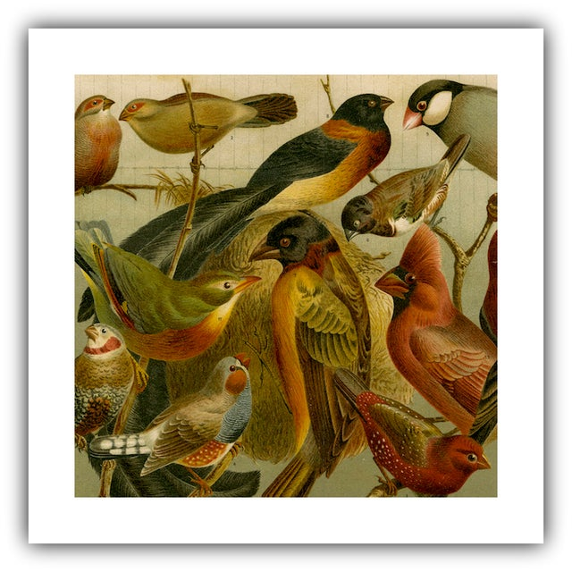 Antique 'Red Birds' Archival Print - Image 2 of 4