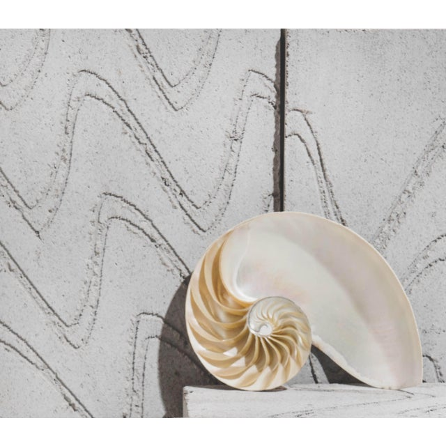 Half nautilus shell decoration. Due to the natural handcrafted materials used, variation in size, shape, and colour should...