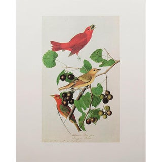 1960s Cottage Style Lithograph of a Red Summer Bird by John James Audubon