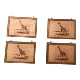 Giraffe Prints in Wood Frames - Set of 4 For Sale