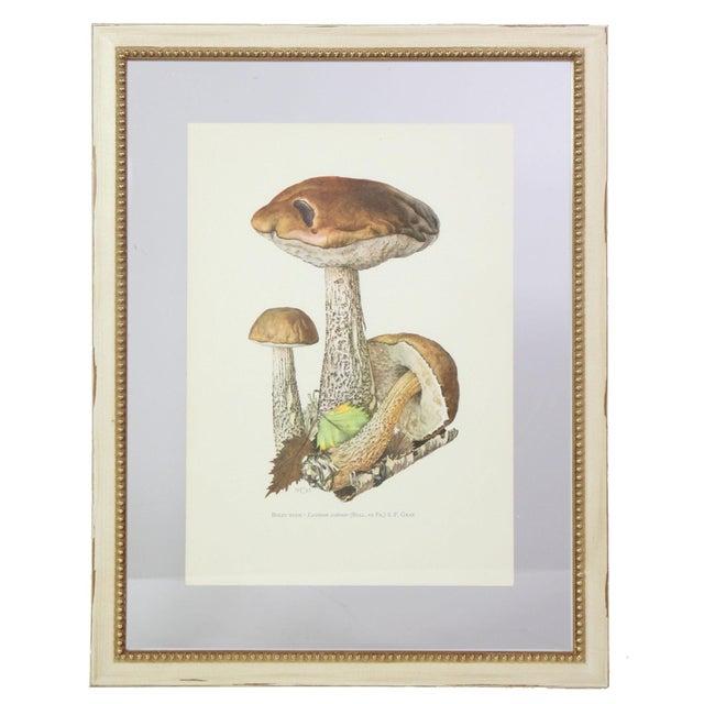 Antique French Botanic Mycology Study Lithograph - Birch Bolete Mushroom For Sale - Image 4 of 4