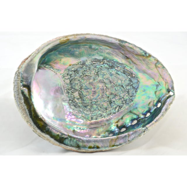 Boho Chic Aqua Blue Abalone Shell For Sale - Image 3 of 5