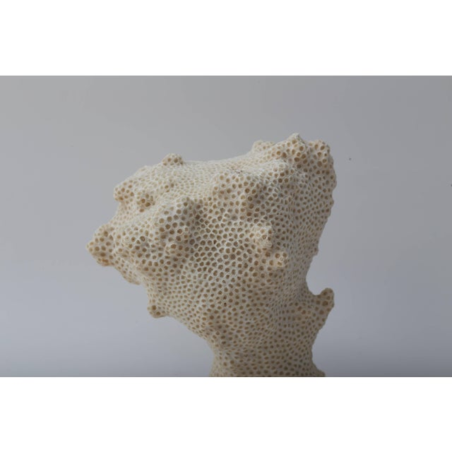 Contemporary White Specimen Conch Shell Form Coral Mounted on Solid White Lucite Base For Sale - Image 3 of 8