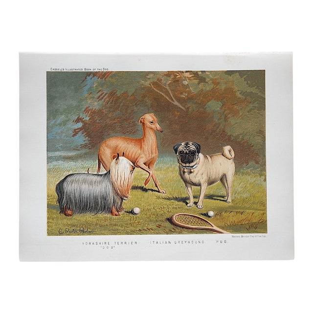 Antique Dog Lithograph - Yorkie, Greyhound, Pug - Image 1 of 3