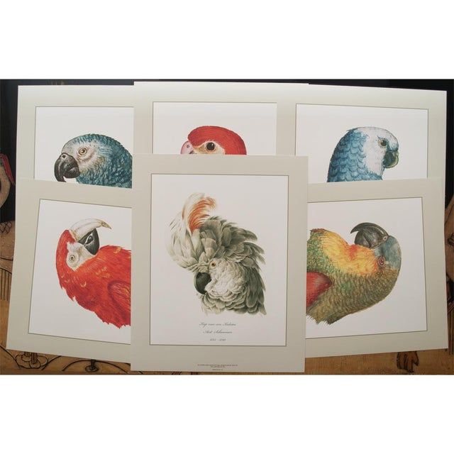 Green Large 16-18th C. Parrot Head Study Prints - Set of 6 For Sale - Image 8 of 10