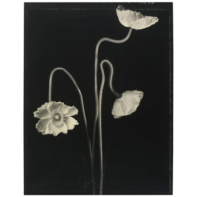 "Contemporary Tom Baril, ""Three Poppies #1"" Photograph For Sale - Image 3 of 3"